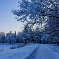 Зимняя сказка в Гатчинском парке :: Алёнка Шапран
