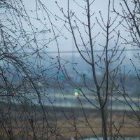 Туман :: Елена Кириллова