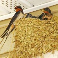 Семейка птах... :: Арина