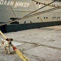 Утренняя зарядка корабельного пса... :: Кай-8 (Ярослав) Забелин