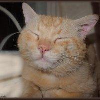 Благодушное настроение после трапезы....отогрелся...наелся...можно поспать!) :: Людмила Богданова (Скачко)
