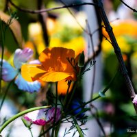 Цветочный коктейль :: Nikolay Volkov