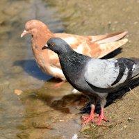 пойдем поплаваем! :: linnud