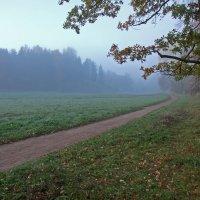 Утро туманное... :: Александр Петров