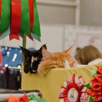 Найди кота :: Nina Grishina