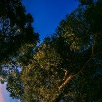 Trees :: Ангелина Френк