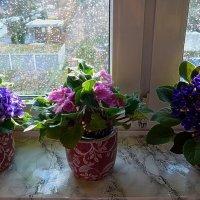 Как-то весною. Фиалки на подоконнике, капли дождя на стекле :: Nina Yudicheva