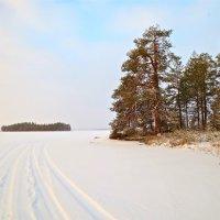 остров на зимнем озере :: Елена