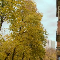 Вид из окна :: Елена Назарова