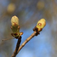 Весна пришла в апреле! :: Леонид