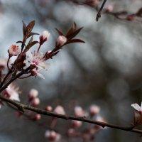 цветочки :: Ольга Адаменко