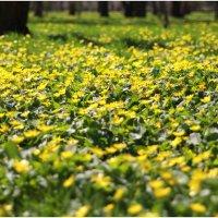 Запахло весной ) :: Райская птица Бородина