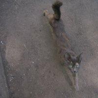 Асфальтовая кошка :: Ольга Алеева