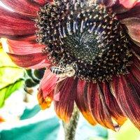 пчелка :: Dmitry i Mary S