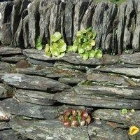 Древняя стена :: Natalia Harries