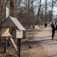 Весна в Царском селе :: Андрей Илларионов