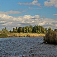 Река Толба :: Олег Попков