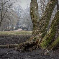 Туманное утро. :: Наталья Иванова