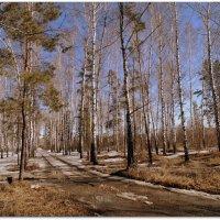 В весеннем лесу. :: Мила Бовкун