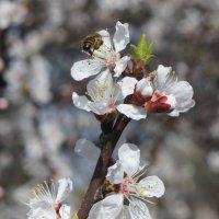 Пчела :: Екатерина zZz