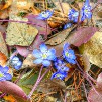 Про весенние цветы :: Милешкин Владимир Алексеевич