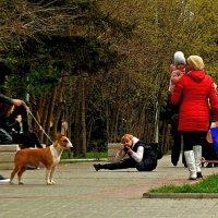 фотографиня и фотографируемая :: Александр Корчемный