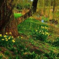 Ботанический сад Гамбурга. Ива у воды и нарциссы :: Nina Yudicheva