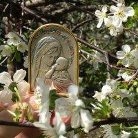 Весна – это настоящее возрождение, кусочек бессмертия. :: Anna Gornostayeva