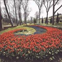 Фестиваль тюльпанов в Стамбуле :: Ирина Лепнёва