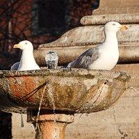 Пентхаус с бассейном и фонтаном :: Nick