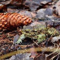 Царевна лягушка :: Paparazzi