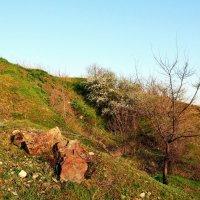Весна в каньоне :: Владимир Болдырев