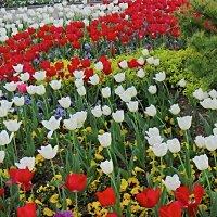Цветы в апреле 4 :: Валерий Дворников