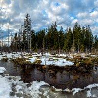 Лес на краю болота. :: Фёдор. Лашков