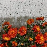 Цветы осени :: Сергей Чиняев