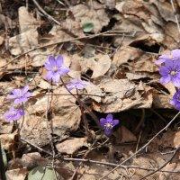 Весна :: Владимир Холодницкий