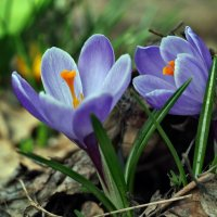 Весны этюды :: Александр Резуненко