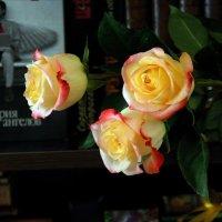 Розы  от Ангела... :: Валерия  Полещикова
