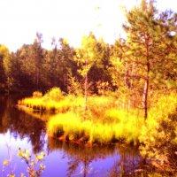 золотая осень :: александр дмитриев