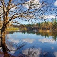Торжественно величие весны... :: Лесо-Вед (Баранов)