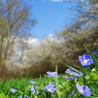 Опять весна на белом свете!!!!! :: Galina Dzubina