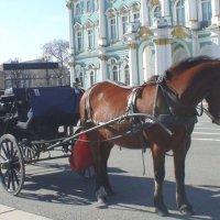 Санкт-Петербург :: elena manas