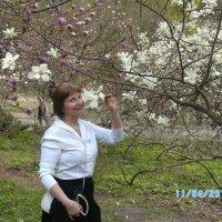 в Киеве цветут магнолии :: Lana Озорная