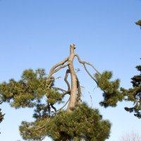 """""""неправильное"""" дерево :: Евгения Курицына"""