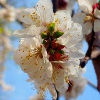 Весна пришла :: Igor Osh