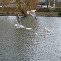 Чайки прилетели :: Анюта Я