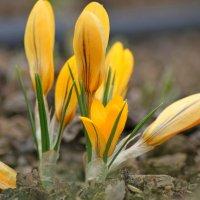 Весна... :: Mari Kush