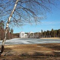 Ранняя весна на пруду :: Лидия (naum.lidiya)