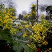 Весенние цветы :: ALEX MAK