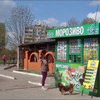 Сколько можно выбирать?.. :: Нина Корешкова